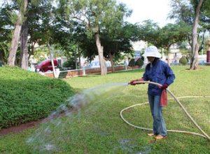Chăm sóc cắt tỉa cây xanh tại Hà Tĩnh và kinh nghiệm chăm sóc cây